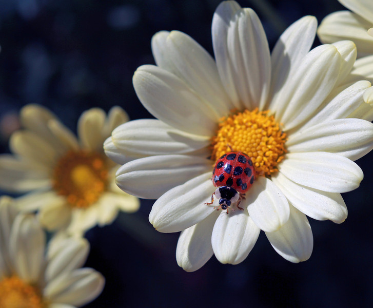 lady Bug Wild 2.jpg