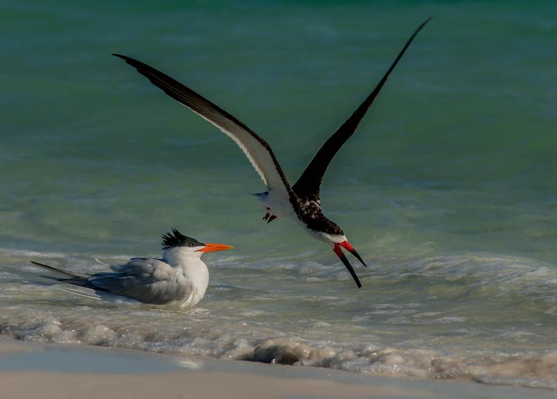 Skimming at the Beach
