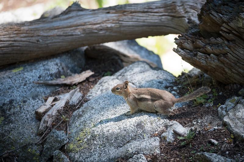 Jay Waltmunson Photography - Wallowa Llamas Reunion - 094.jpg