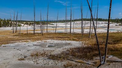 Norris Geyser Basin (Yellowstone NP)