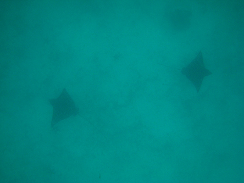 Diving in the Galapagos (272 of 392)