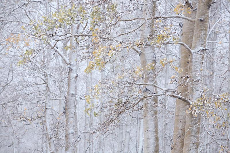 All Seasons