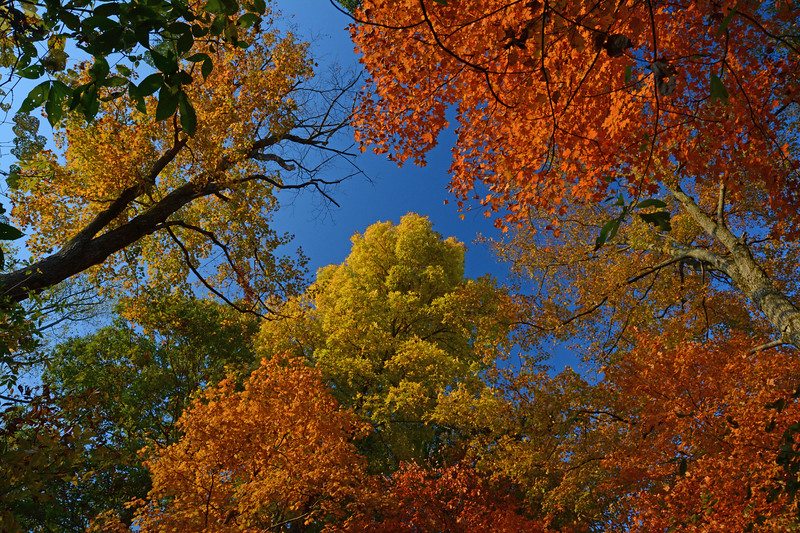 Treetop Colors