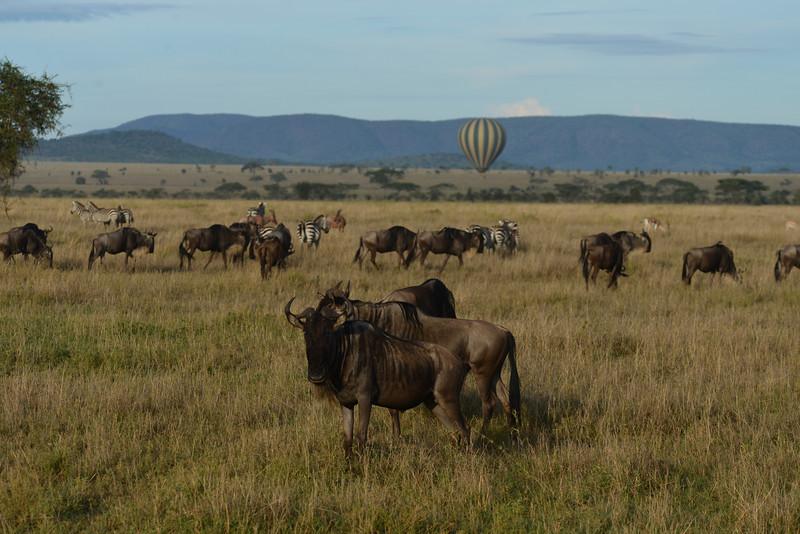 East Africa Safari 312.jpg