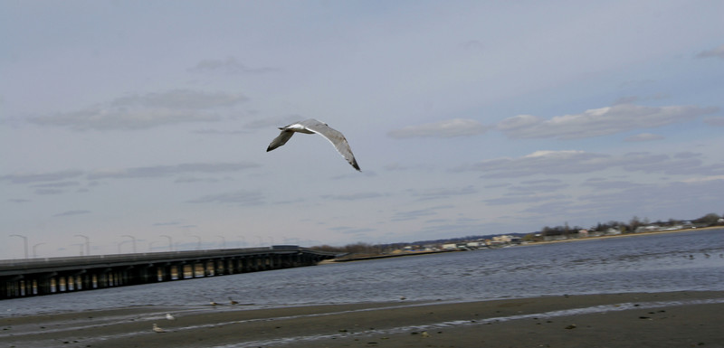 Jamica Bay Shots  April 14 2007 076.jpg