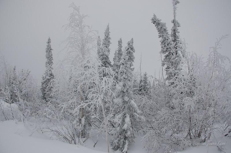 USA-Alaska-arctic-circle-2471.jpg