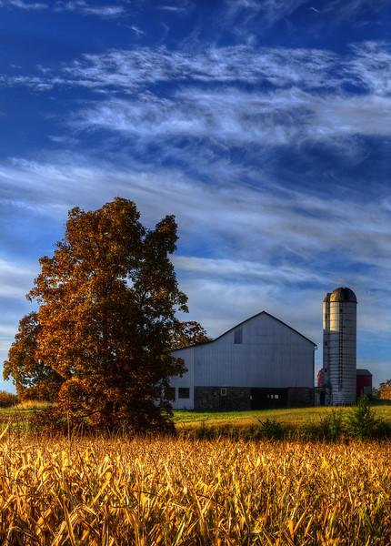 autumn 2014 - bowmansville barn & orange tree(p).jpg