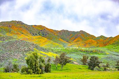 California - Lake Elsinore - Superbloom 2019