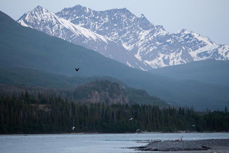 Alaska Copper River-8358.jpg