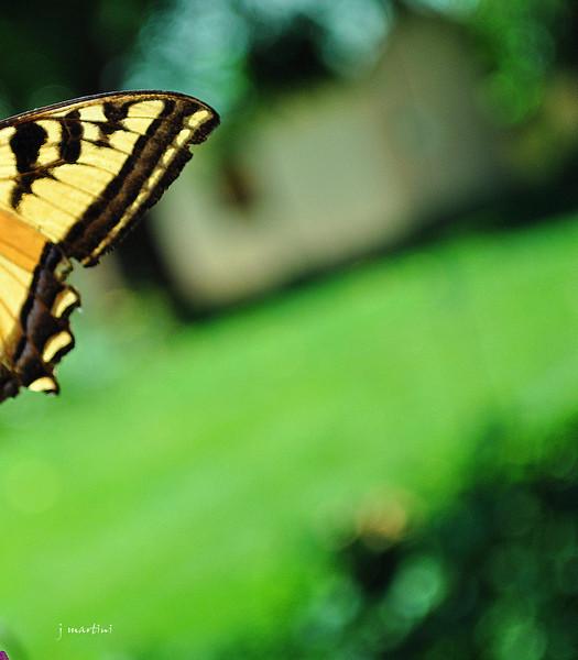 wings of a dream 7-30-2011.jpg