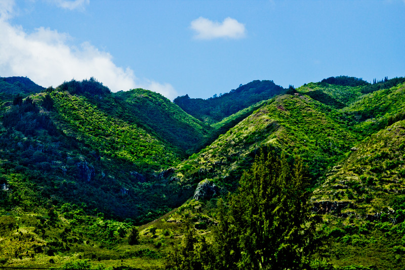 Journey into Oahu Photograph 109