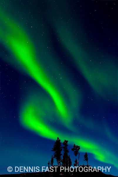 Aurora Borealis Northern Lights over spruce trees on sub-arctic tundra Yellowknife Northwest Territories NWT Northern Canada
