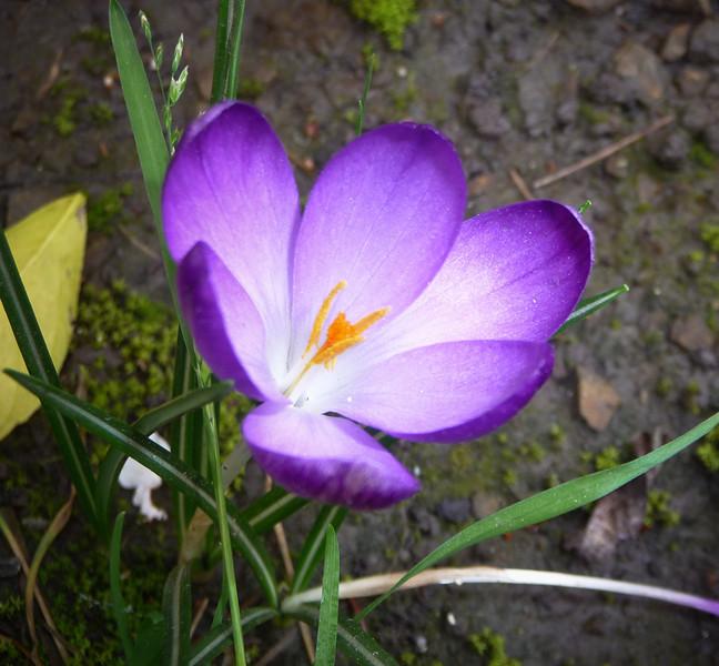 spring flowers-1000752.jpg