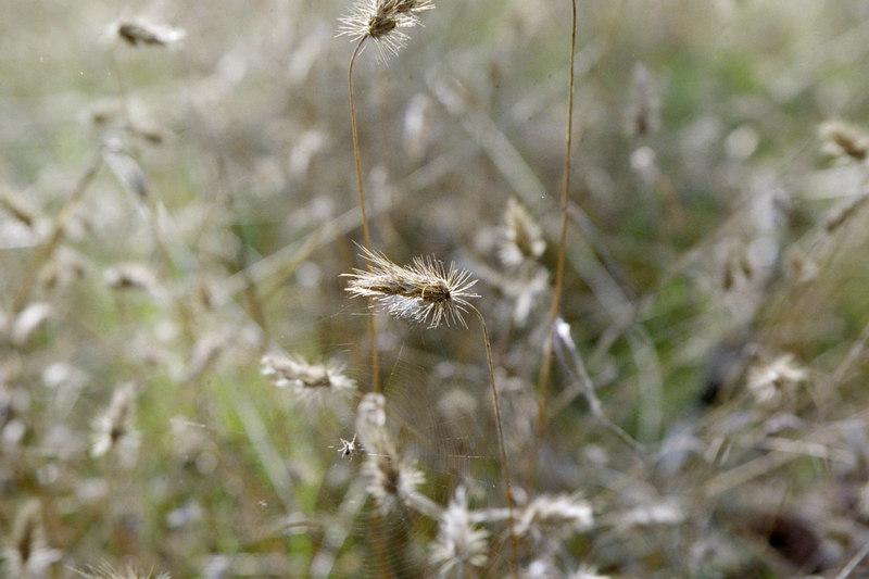 artsy grass photo
