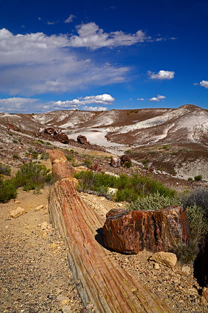 Painted Desert & Pertified Forest National Parks