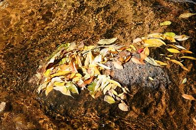 Boulder Creek Fall Foliage