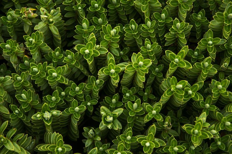 neat plants-1.jpg