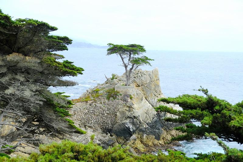 California Day 3 Monterey 05-29-2017 26.JPG