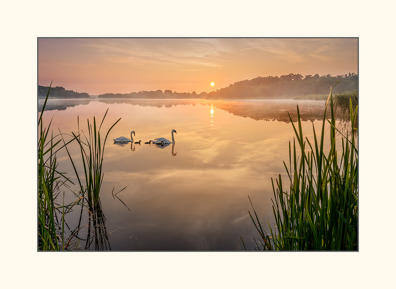 Swan lake - Norfolk Broads.jpg