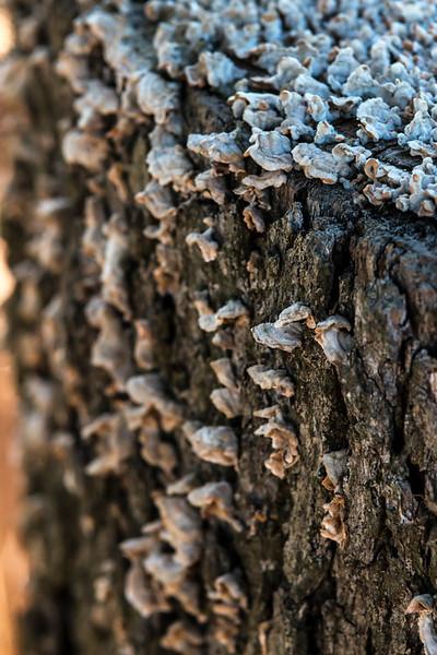 Texas Fungi