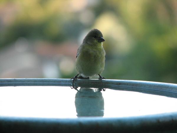 birds (166).jpg