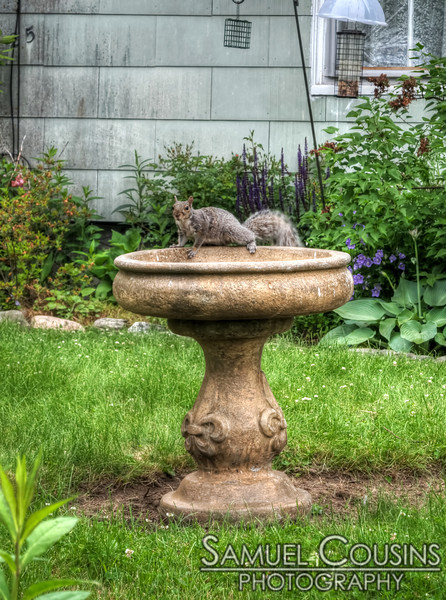 Squirrel on a bird bath.