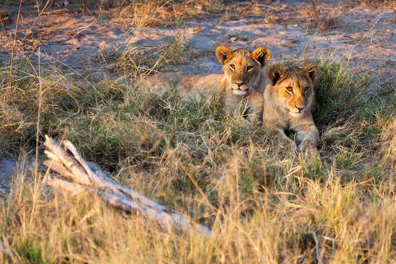 Botswana-46.jpg