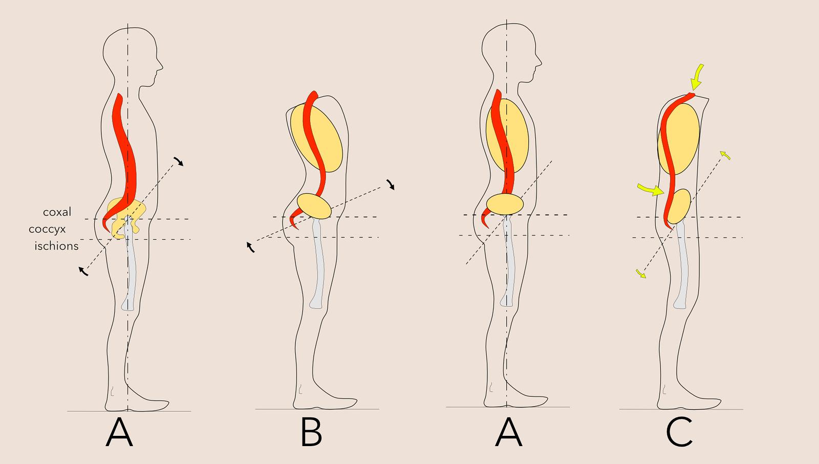 Le rôle de la rétroversion du bassin dans la posture de l'aplomb
