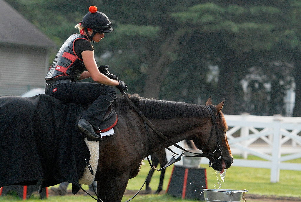 . Exercise rider Jen Patterson sits atop Kentucky Derby winner Orb Aug 19, 2013 after his final major work on the Oklahoma Training Center track in Saratoga Springs, N.Y. Orb will compete in Saturday\'s Travers Stakes at the Saratoga Race Course. Observing the work was his trainer Shug McGaughey, as Orb takes a break for water.Photo Erica Miller/The Saratogian 8/19/13 Orb7