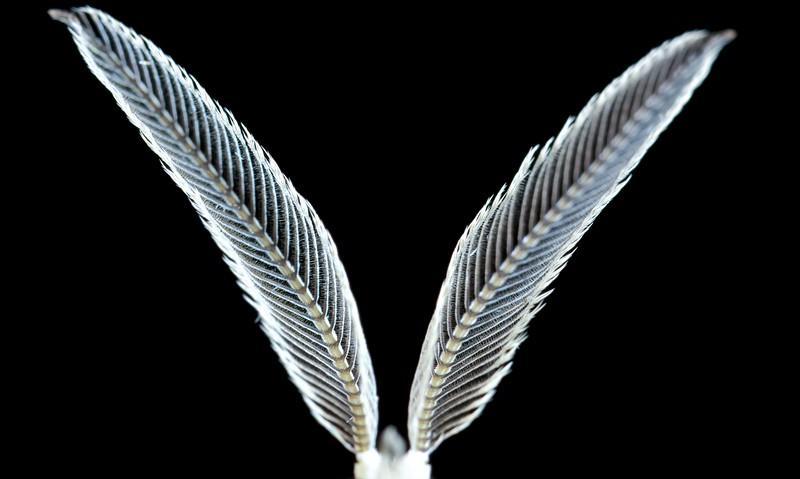Moth antennae
