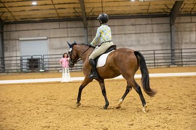 Horse 179