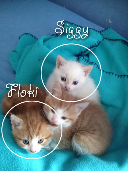 2015-04-26 Floki & Siggy 011a.jpg