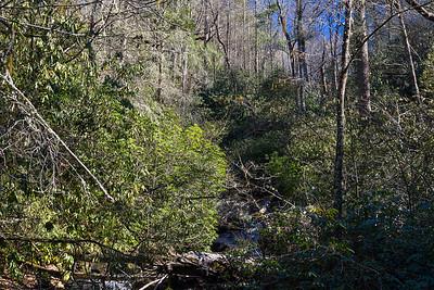 Darnell Creek FS Trail TR 61