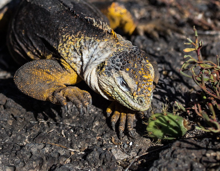 Galapagos_MG_4944.jpg