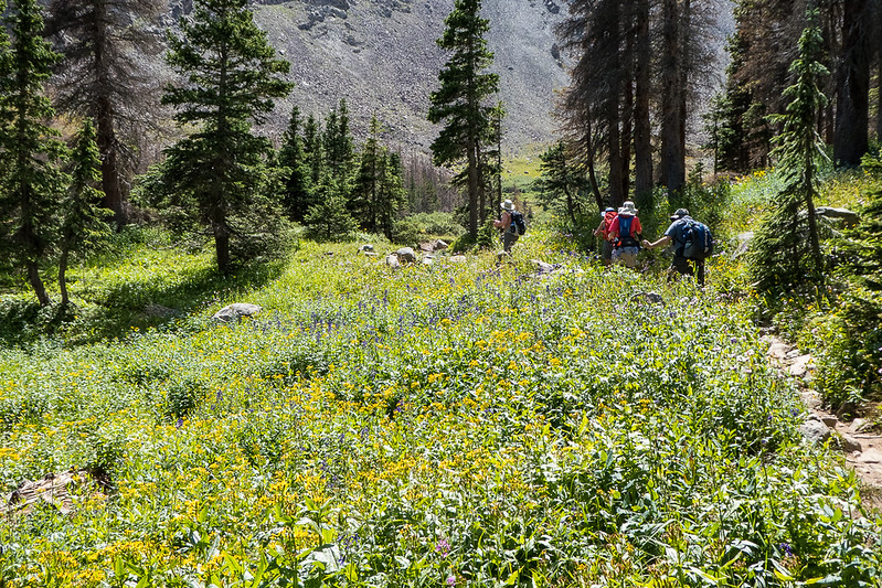 Hikers and field of wildflowers