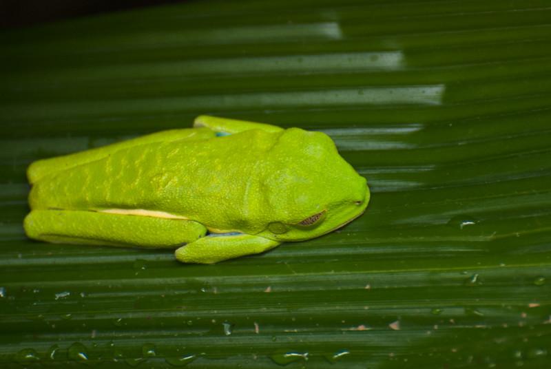 Costa Rica (143 of 104)