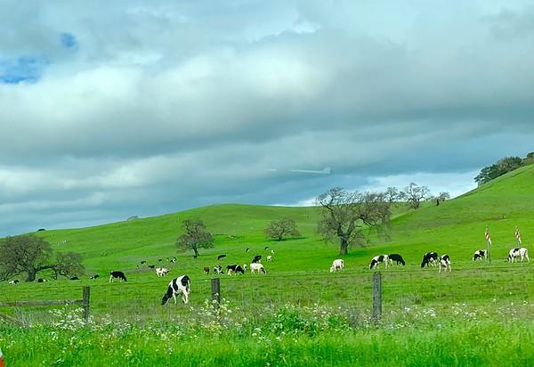 Spring Landscapes 2019