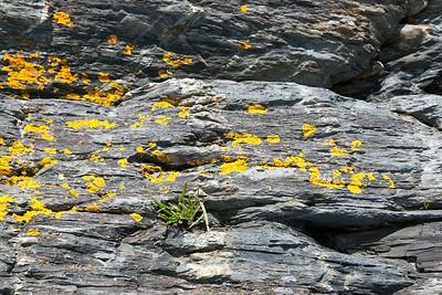 Blue Rocks, NS, Aug. 2014