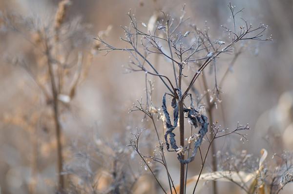 winterlight.jpg