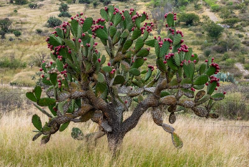 Botanic (desert) garden in San Miguel de Allende