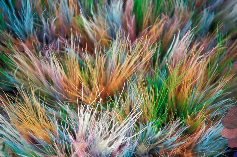 Colored strings.jpg