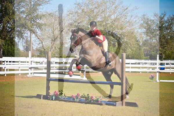 West Coast Morgan Horse Show CLASSES 1-18 & Jumpers