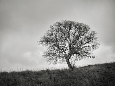 The Wonderful Trees of Calero County Park