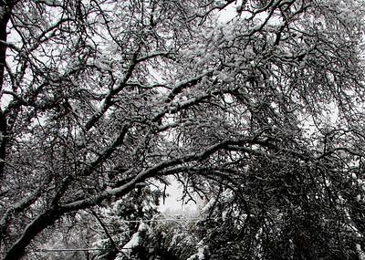 Snow in Cameron Park 2009