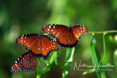 Huntsville Botanical Garden - Huntsville, Alabama