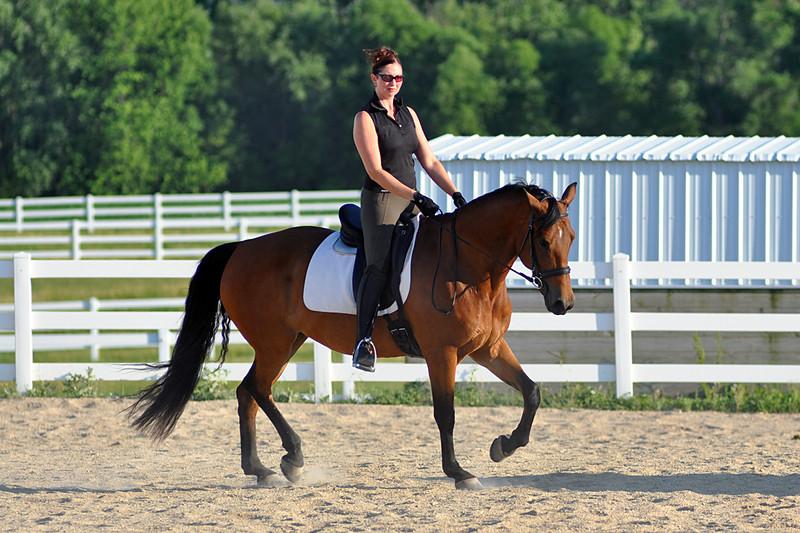 Horses July 2011 262a.jpg