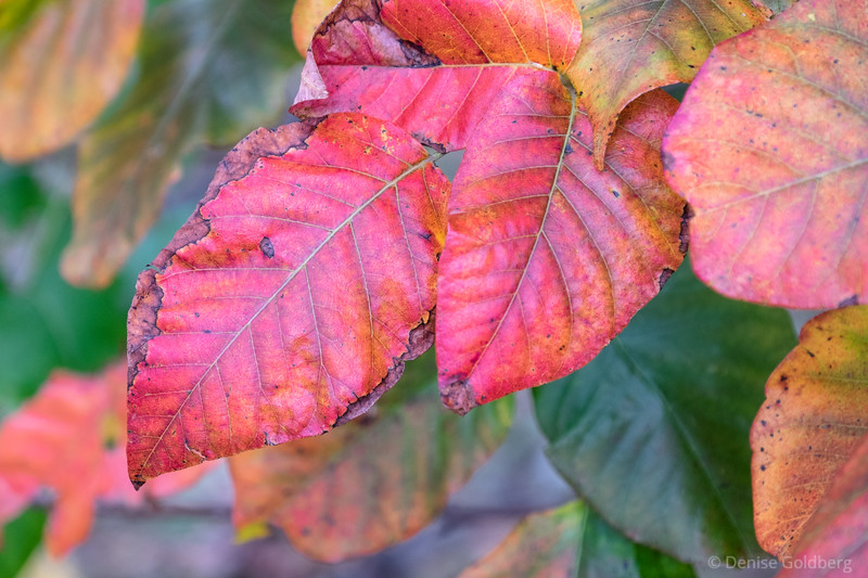 bright colors, edges fading