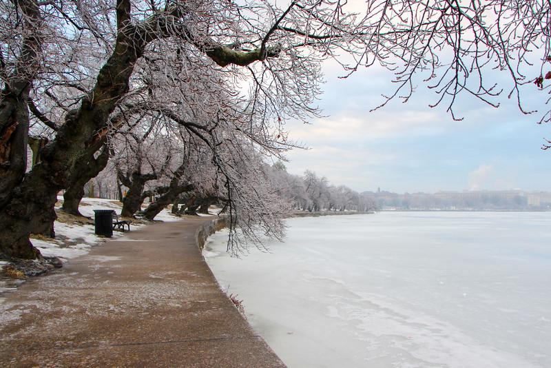 Ice Storm - Tidal Basin