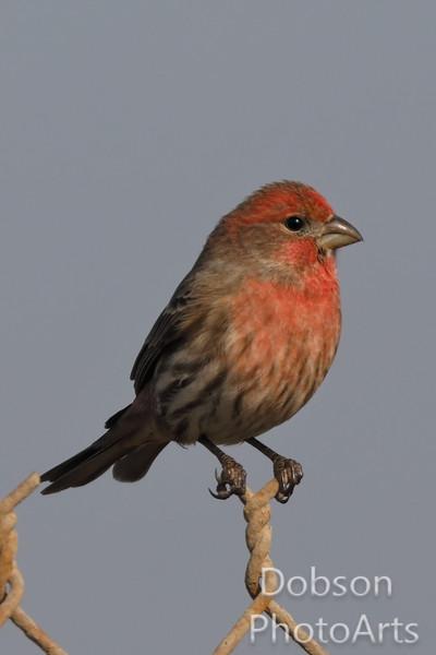 New Land Bird Photos