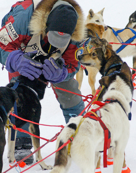 February 1, 2009 Beargrease Sled Dog Race